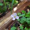 unidentified plant
