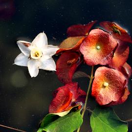 Flowers in the pool by Vivek Sharma - Flowers Flowers in the Wild ( vivekclix, wildflowers, nature, pool, beauty in nature, water, flower )