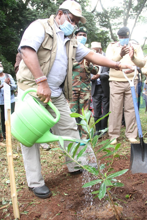 Environment CS Keriako Tobiko waters a tree he planted to mark the International Day to Combat Desertification and Drought at Nairobi City Park on June 17,2020