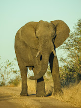 Photo: this elephant was blocking the road- we had to wait until it moved far enough away to pass- that was about 10 minutes