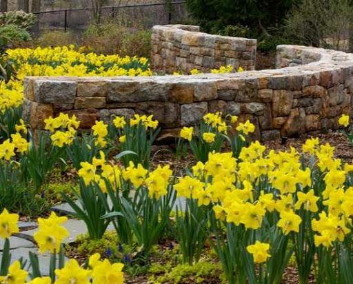 花卉园设计
