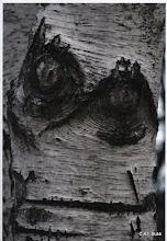 Photo: Barbara Giunti - Il teschio della betulla