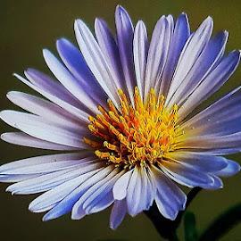 flower by Cattleya Direnzo - Uncategorized All Uncategorized ( flowering, flower nature, flowerplot, flower photography, flower )