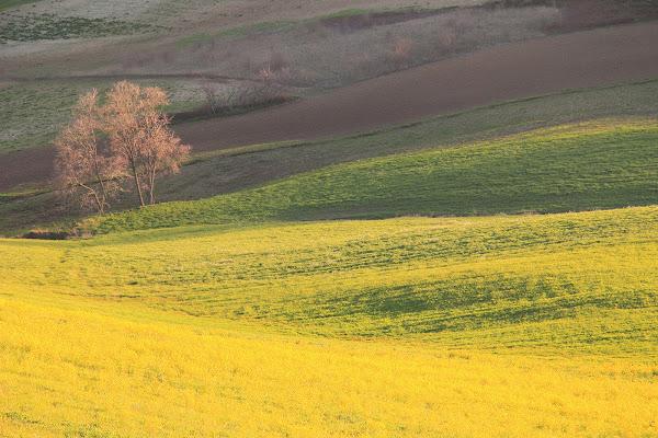 la campagna a primavera di rino_savastano