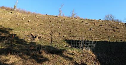 Photo: La Heid des gattes du coin