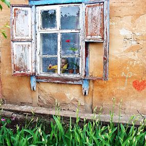 Love me by Vladimir Krizan - People Street & Candids