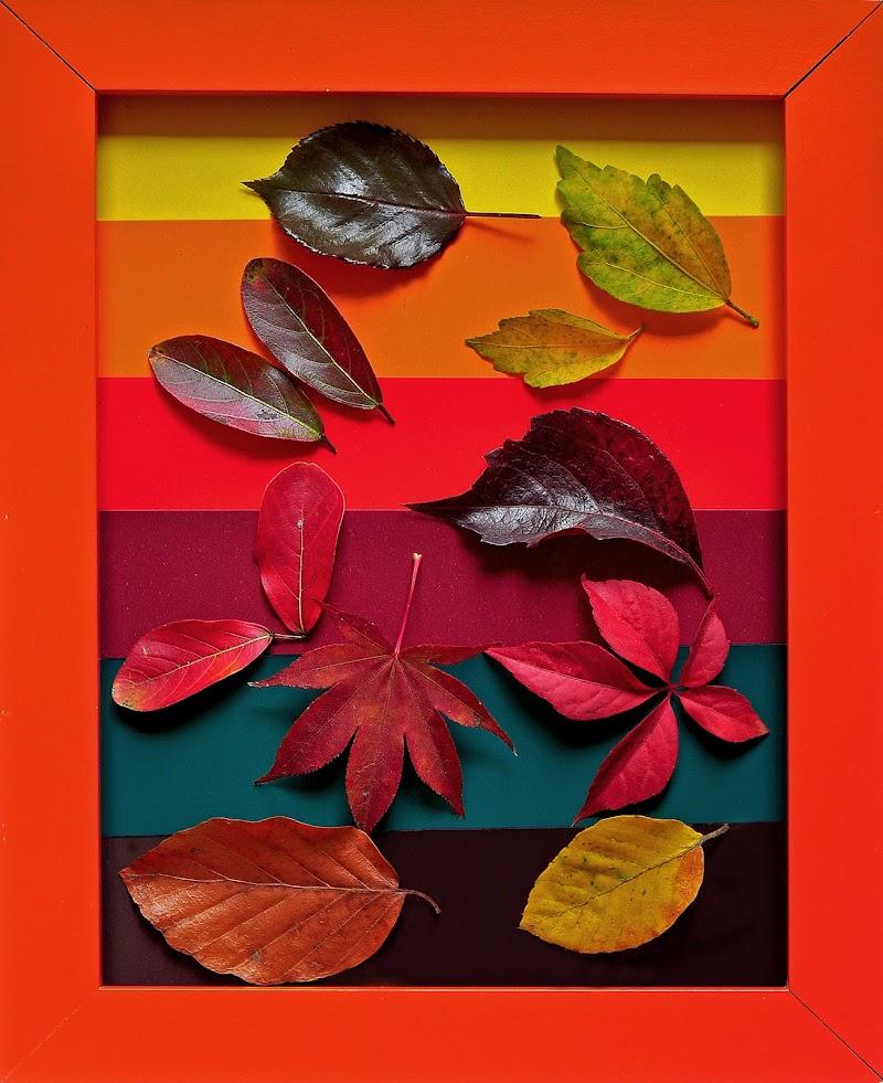 """""""L'autunno è una seconda primavera dove ogni foglia è un fiore."""" Albert Camus di kaos"""