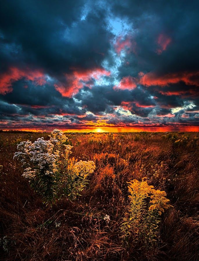 Waking Angels by Phil Koch - Landscapes Prairies, Meadows & Fields ( summer. spring, vertical, photograph, farmland, yellow, leaves, storm, love, nature, autumn, snow, flowers, flower, wind, orange, twilight, agriculture, horizon, portrait, environment, winter, season, national geographic, serene, floral, inspirational, wisconsin, natural light, phil koch, spring, sun, photography, farm, ice, horizons, rain, inspired, office, clouds, green, scenic, morning, wild flowers, field, red, blue, sunset, peace, fall, meadow, earth, sunrise, landscapes )