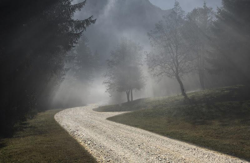 nebbia mattutina di artu