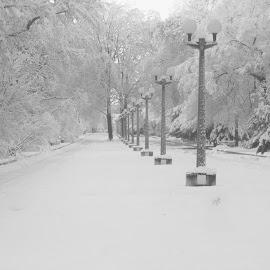 by Dušan Gajšek - Black & White Street & Candid ( zima, narava, maribor, park )