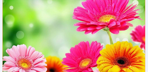 Descargar Spring Flower Live Wallpaper Para Pc Gratis Ultima