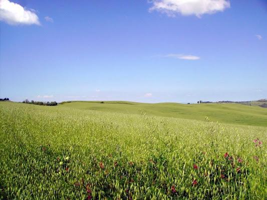 Verde Toscano di Simo-Foto