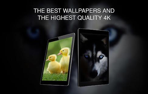 Animals Wallpapers for PC-Windows 7,8,10 and Mac apk screenshot 11