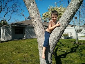 Photo: Clark in a Tree