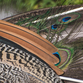 Peacock Up Close by Mikahla Dorey - Abstract Macro ( macro, wildlife, feathers, peacock )