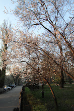 Photo: Almatos ore sklandė ramybės ir pavasario kvapai.  In Almaty's atmosphere one could sense the spring.