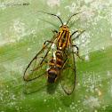 unknown diurnal moth