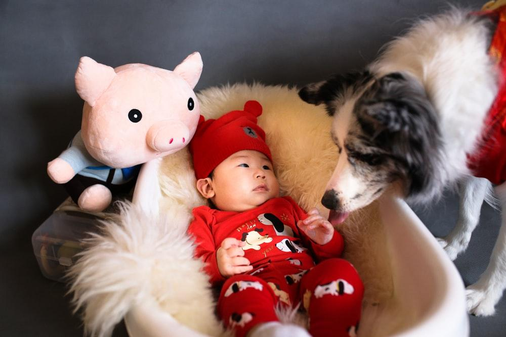 baby in bassinet with pig plush toy and white-and-black dog