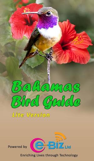 Bahamas Bird Guide