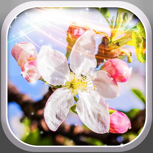 春の 桜 の花 ライブ壁紙 個人化 App LOGO-硬是要APP