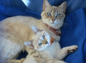 Do cats eat their kittens if you touch them