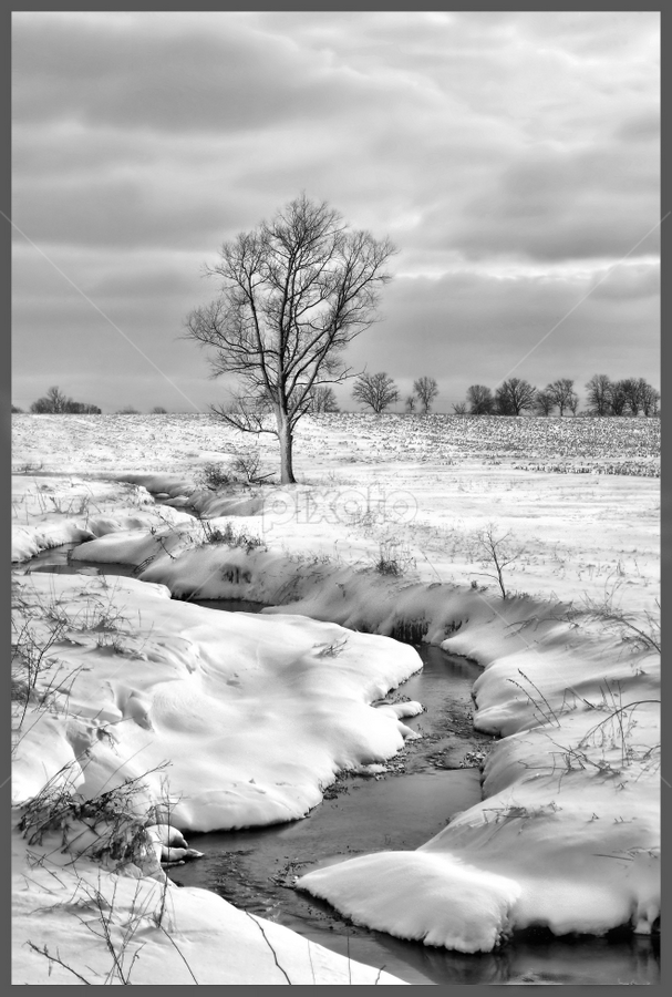 (A)Lone and Cold by Vickie Barnhill - Landscapes Weather