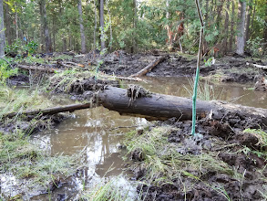 Photo: One can imagine an otter using the large log placed in this new wetland.
