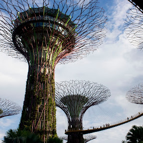 Garden By The Bay by Beng Lim - Travel Locations Landmarks ( garden by the bay, tree, park, asia, travel, garden, singapore, attraction )