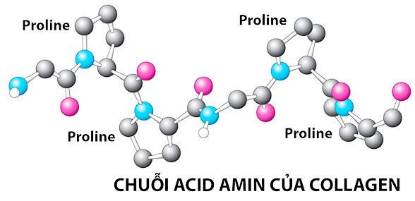 cac-axit-amin-tao-nen-collagen