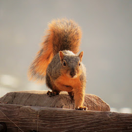 Hey you Looking at me! by Carol O'Connor - Animals Other