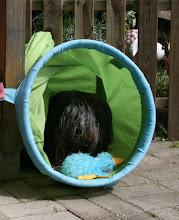 Photo: Cini gibt allen Tieren Ausgang im Freien