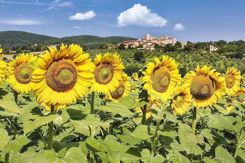 Umbria, il colore del sole di maurizio_varisco