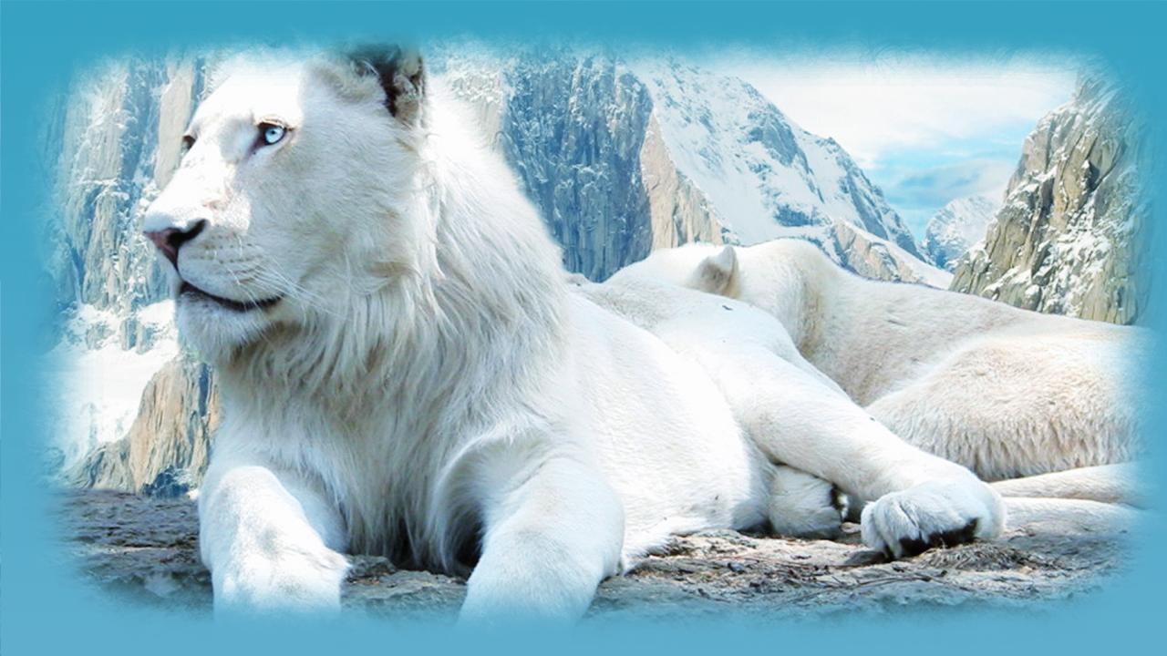 Hd wallpaper lion - White Lion Hd Wallpaper Screenshot