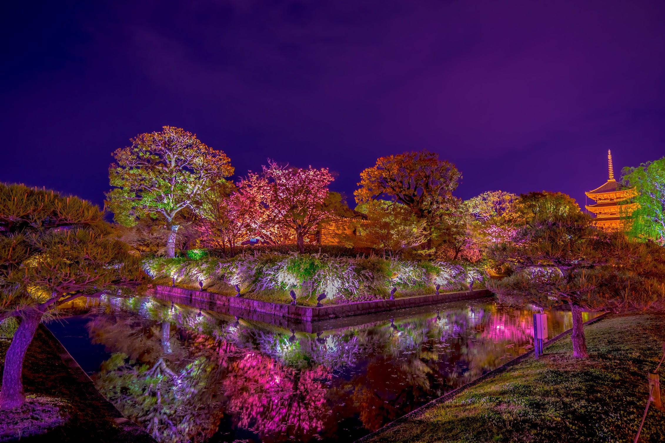 京都 東寺 桜 ライトアップ5