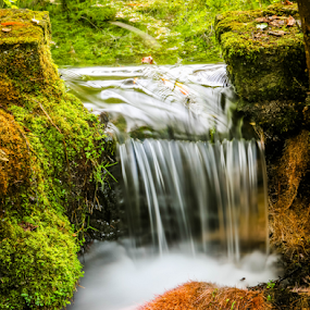 Cut out by Dale Youngkin - Landscapes Waterscapes ( water, stream, waterscape, waterfall, moss,  )
