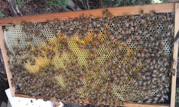 Photo: Hive#2