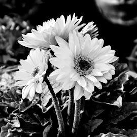 by Saqlain Raza - Black & White Flowers & Plants