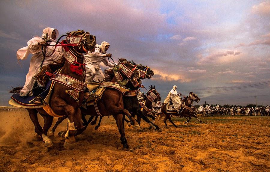 Knights of Libya by Hisham Elhuni - Animals Horses