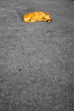 Photo: Disfruté jugar con los colores y la composición de esta imagen...