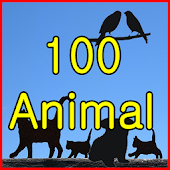 animal pictures 100