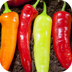 Hot Chili Peppers Wallpaper