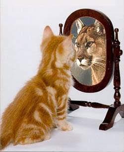 Até um gato pode ser um Tigre! xD