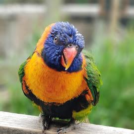 by Sean Parker - Animals Birds (  )