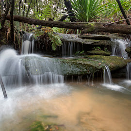 Small Cascades by Geoffrey Wols - Nature Up Close Water ( forest, waterfall, bush, plants, girakool, trees, water,  )
