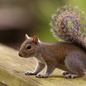 Florida Squirrel by George Bloise - Animals Other Mammals ( florida, green, texture, squirrel, animal )