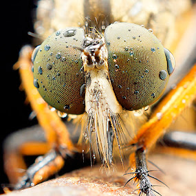 by Abgtamz Ally - Animals Insects & Spiders ( animals, nature up close,  )