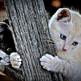 Hold on Bro! by Pieter J de Villiers - Animals - Cats Kittens
