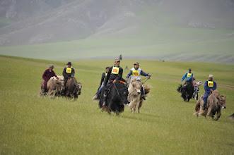 Photo: Course de yaks - la course est la première des épreuves. Un yak se monte a cru, et même si ça ne court pas très vite, ça court. Cela étant, on ne peut pas dire que les bêtes soient à la fête sur les 10 km du parcours...