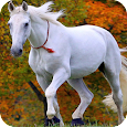 Horse Full HD Wallpaper icon
