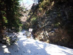 左の林道を進む